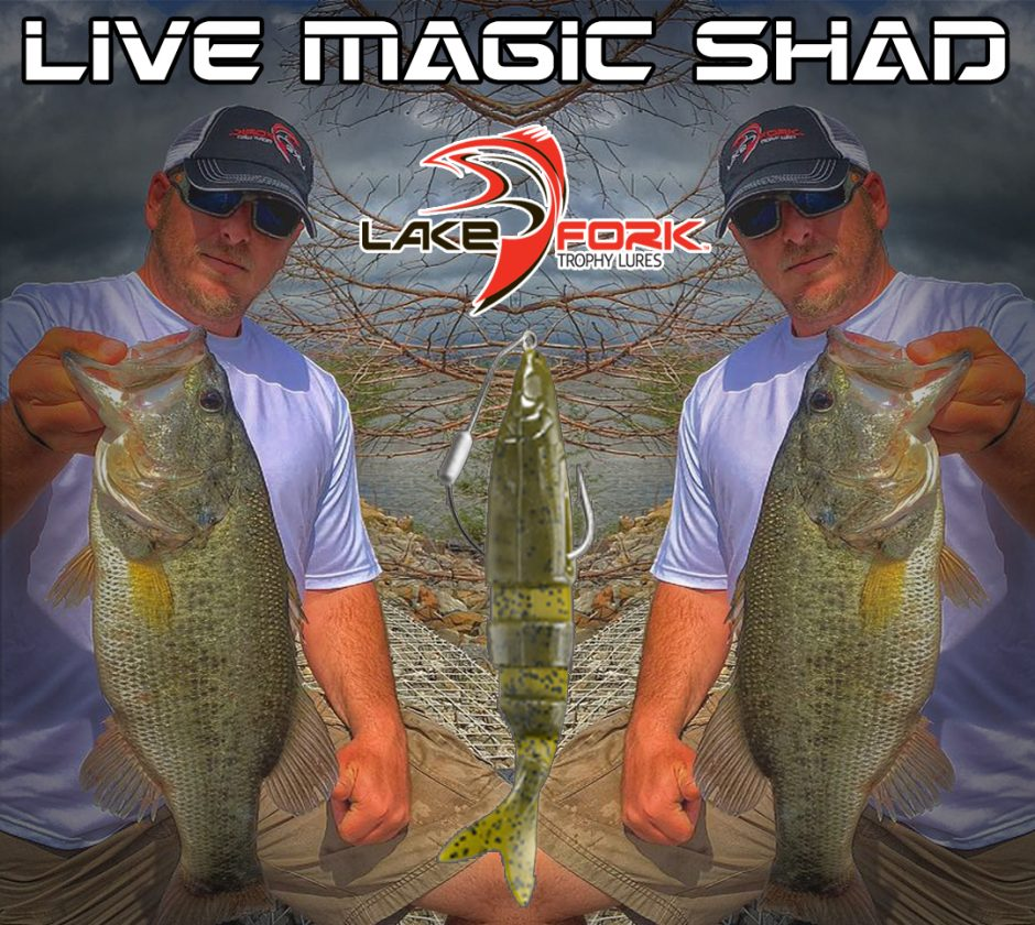 Live Magic Shad