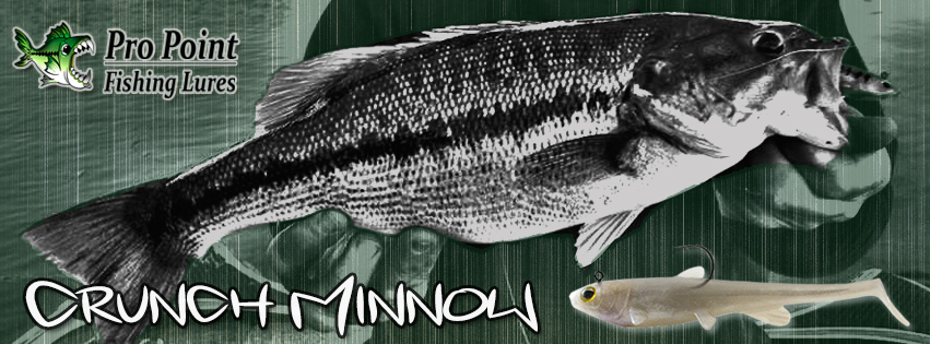 ppfl-crunch-minnow-box-website-front-page