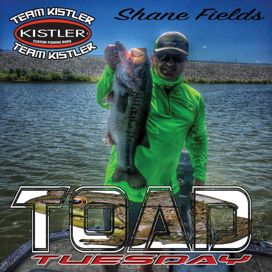 shane-fields-toad-tuesday